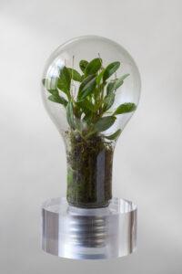 Trophäe Sustainability Award